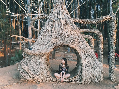 hutan pinus pengger mangunan